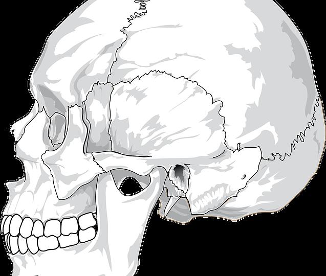 skull-31060_640